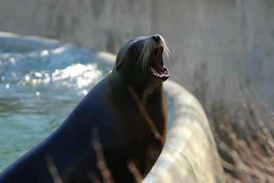 Bronx Zoo - Winter 2005