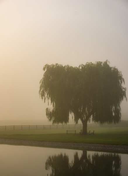 Reflection - Willow in the Fog(p).jpg