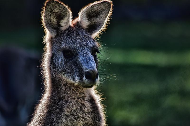 Aussie icon!!