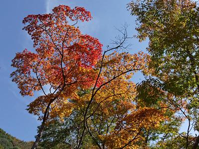 Autumn Color in Osaka 2