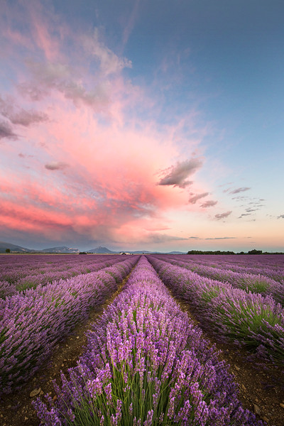 pink clouds lavender vert 2 lighter.jpg