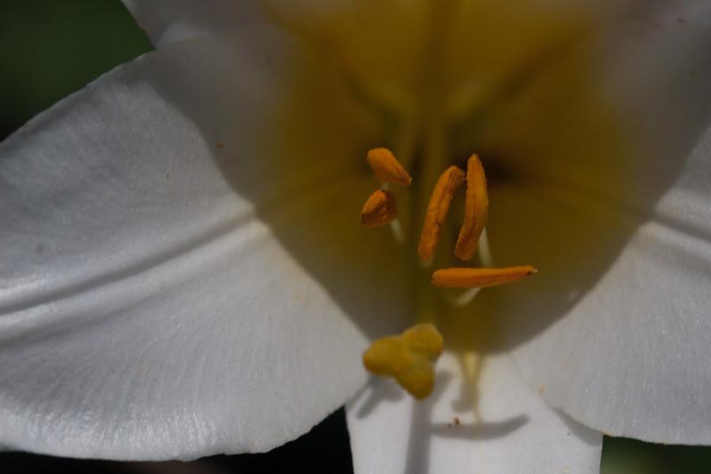 2009 06 30_NY Botanical Gardens_0664.jpg