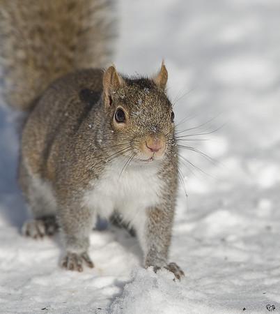 Squirrels 08