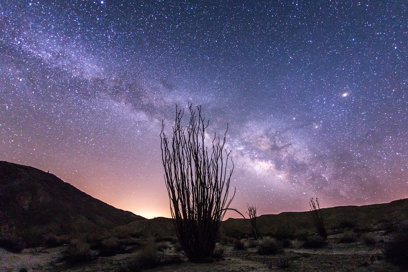 Milky Way and an Ocotillo