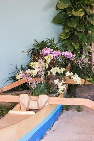 2.25.19 Chicago Botanic Garden Orchid Show