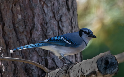 BIRDS D850 2017