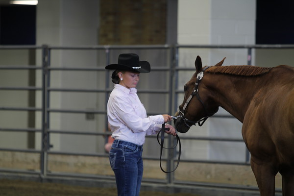 """Class 6-9 and Champion Pony 56"""" and Under"""
