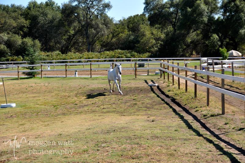 EB&Horses-084.jpg