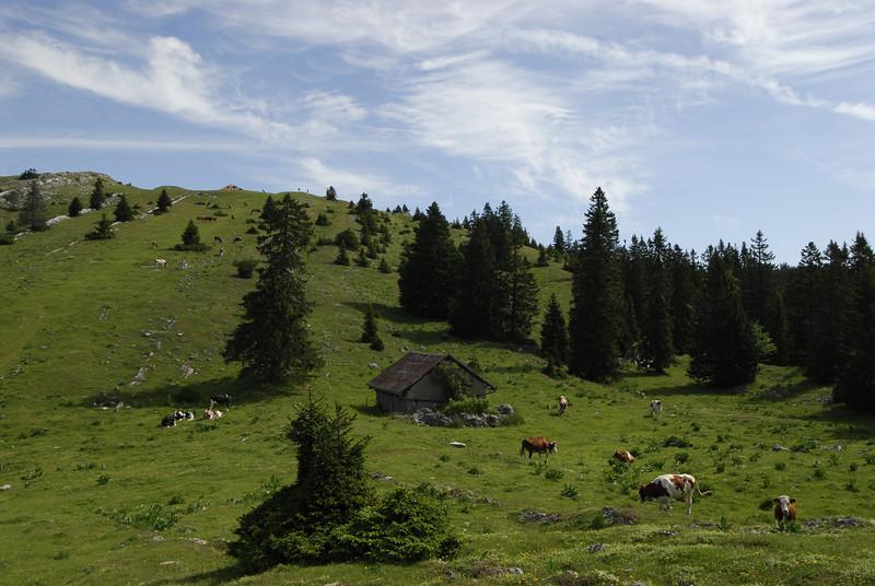 070626 7252 Switzerland - Geneva - Downtown Hiking Nyon David _E _L ~E ~L.JPG