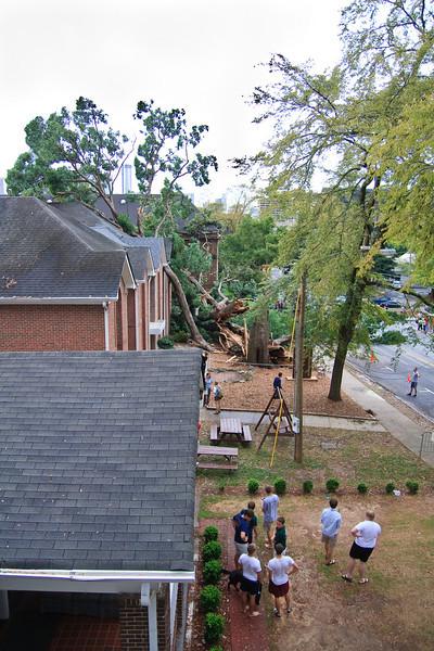 CCF Tree Collapse
