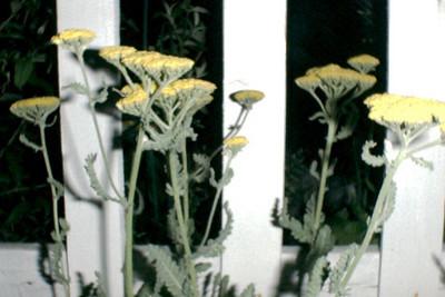1999-Crystal's garden