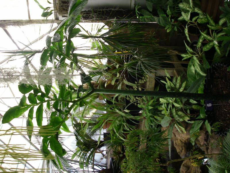 Trip,family,botanic gardens 078.JPG