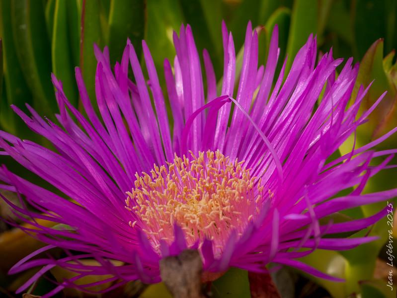 Flora in Mljet National Park