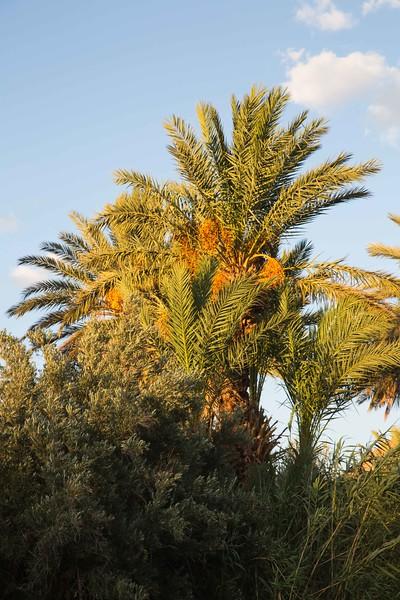 160925-125700-Morocco-0582.jpg