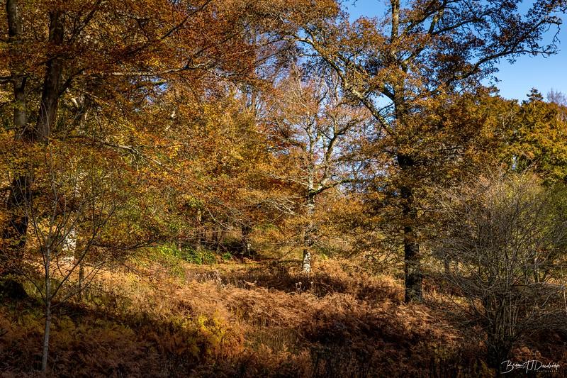 Wakehurst_Autumn-6128.jpg