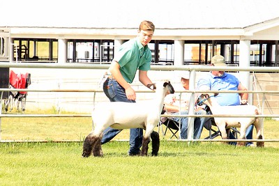 Sheep Showmanship Sat