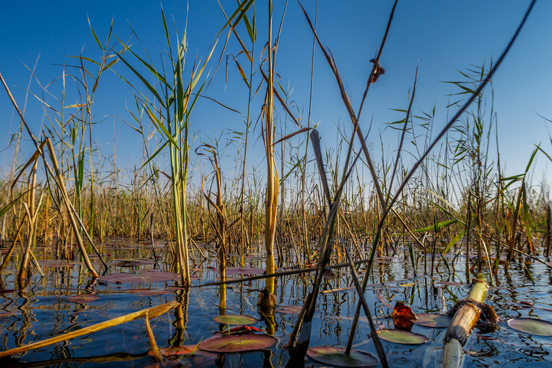 Okavango River.