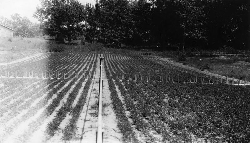 AR043.  Crop irrigation system.jpg