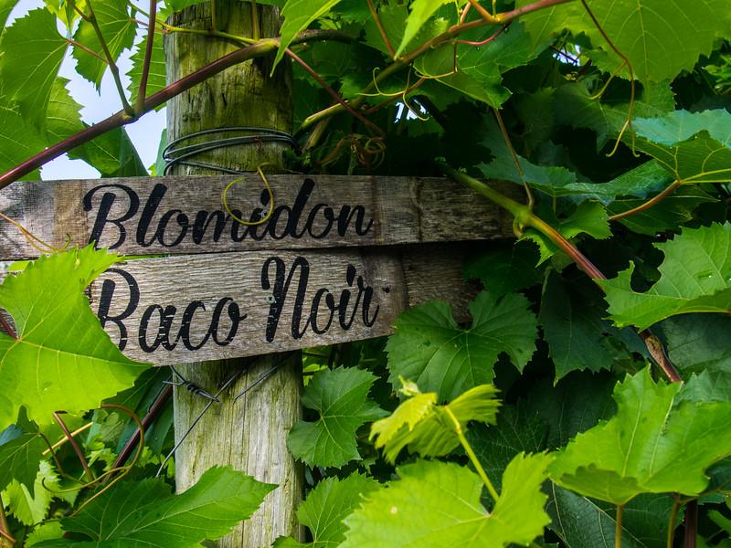 Blomidon Estates baco noir.jpg