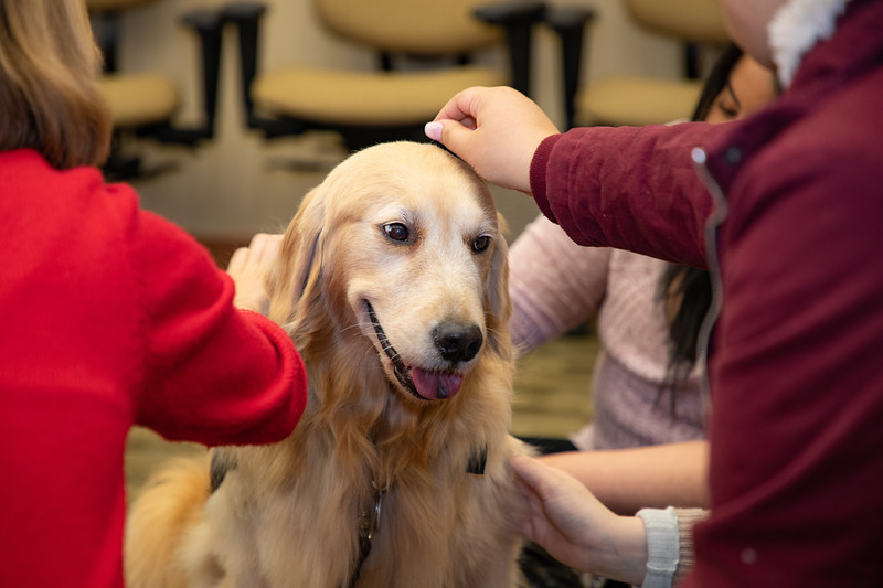 Therapy Dogs Sassy-7126.jpg