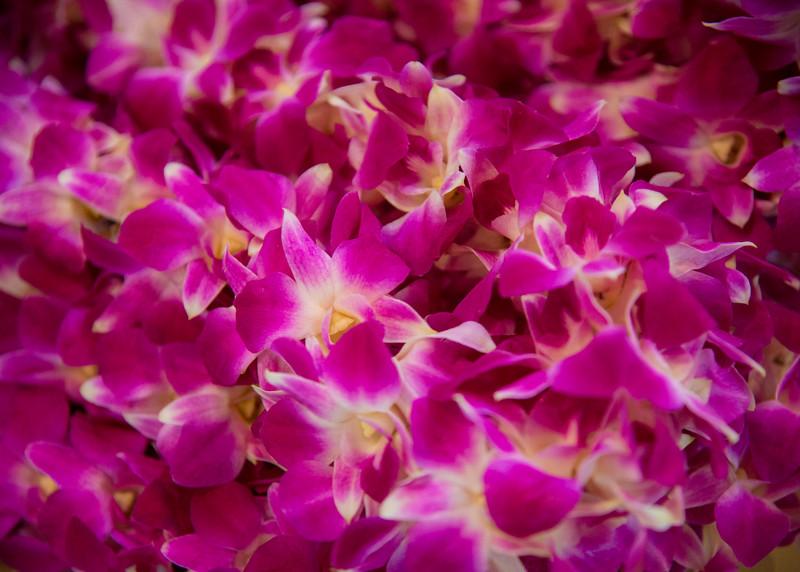 051416_SpringCommencement_LW-8332.jpg