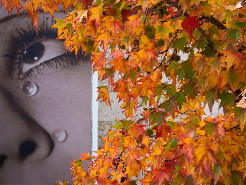 December 7 - Colors of autumn bring tears of joy.jpg