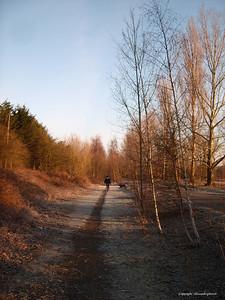 Walking by the lake  A Morning Walker
