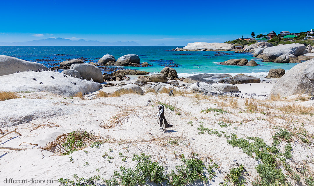 Cape Town, Boulders Beach, African Penguin, sanctuary, Table Mountain National Park