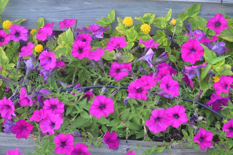 021 Flowers.jpg