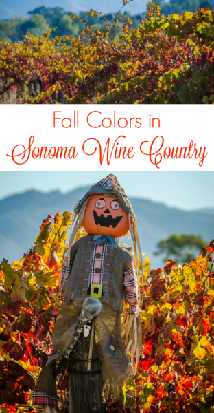 Fall colors in Sonoma County