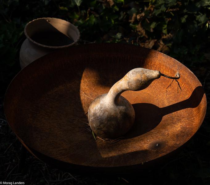 Su Gologone Still Life - Morag