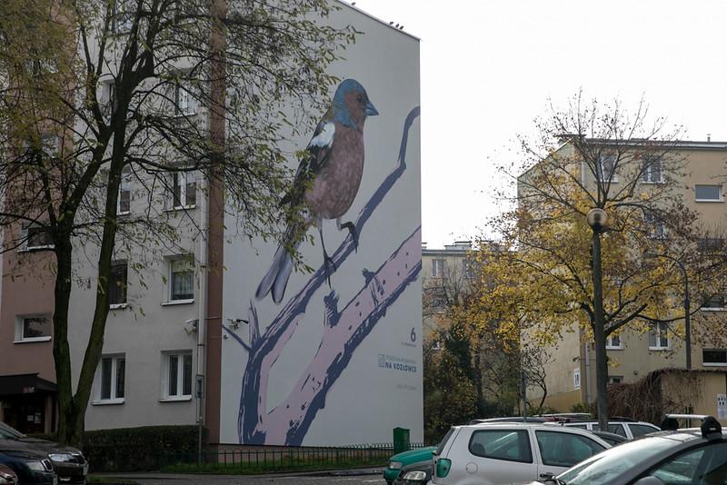 ptasie-murale-autor-wojciech-rokosz_5.jpeg