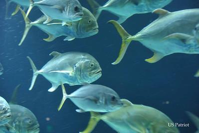 Georgia Aquarium, 9 Jul 11