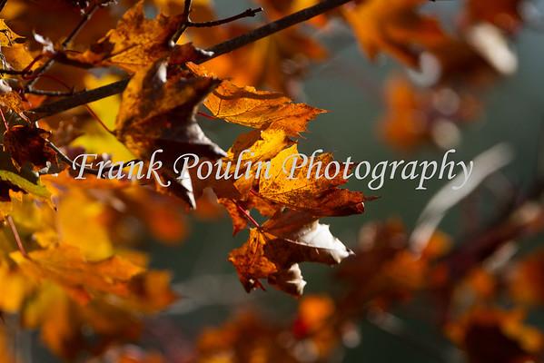 Autumn Leaves 2014