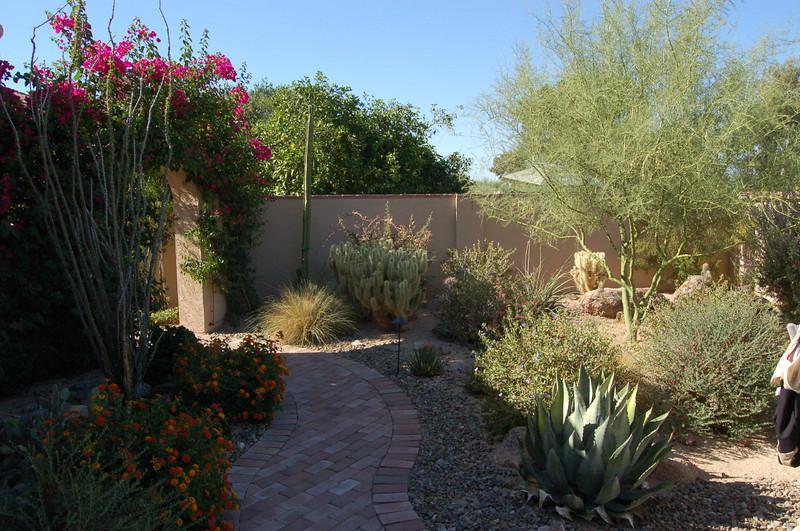 20120607_Scottsdale Back Yard_012.JPG