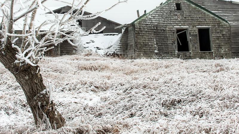 Frosty day - Alberta