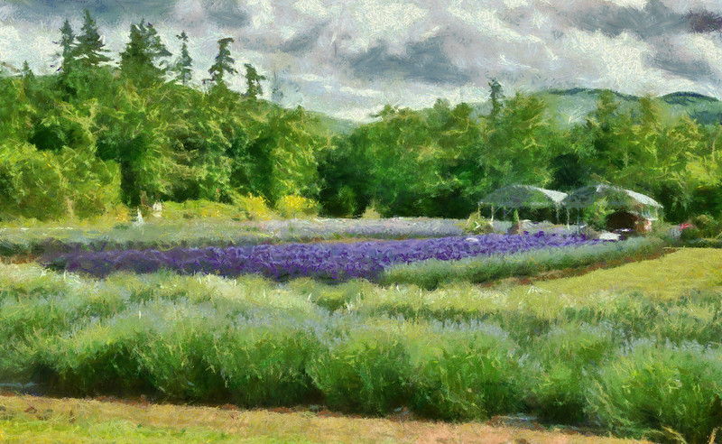 "03 Jul 14.  With Theatrical Thursday being upon us, the Sequim Lavender Festival not being very far off, a visit there just a week ago to visit the game farm, and many emails asking for more of the painterly looking images, we'll go with a Monet-like rendition of my favorite lavender farm. As you approach Sequim, this is the first farm you encounter and perhaps the nicest laid out of all the farms. It is one of two that have entertainment for you at no charge as well as speakers showing you how to do different ""crafty"" things all associated with lavender. The owners are very nice and make themselves available to chat with you about all aspects of running a lavender farm. If I had to limit my time while trying to see as much as I could, I would visit this farm and just two others. Up until last year my list would have included a fourth, but it was sold and the new owners have taken it in another direction and it is no longer in play. Although I work hard to keep people out of my images, this particular shot would have benefited from a couple of lasses in long skirts and bonnets walking in the grassy field at the right of the frame. Yes, I could have put them in, but that is something I have never done with an image, save for replacing a very boring sky now and then. The image was shot around 1900 so the sky was not as bright as I would have liked it, so I brightened it a bit and then added a fair amount of contrast enhancement to it before converting it to the painting look. Without the adjustments, the resulting transformation would have been a bit ugly. With the texture for the sky, the conversion worked well. I thought about making this as a van Gogh employing his short brush strokes, but elected to go with the Monet approach as it seemed more like something he would have painted had he had access to lavender fields. Nikon D300s; 18 - 200; Aperture Priority; ISO 200; 1/320 sec @ f /8."