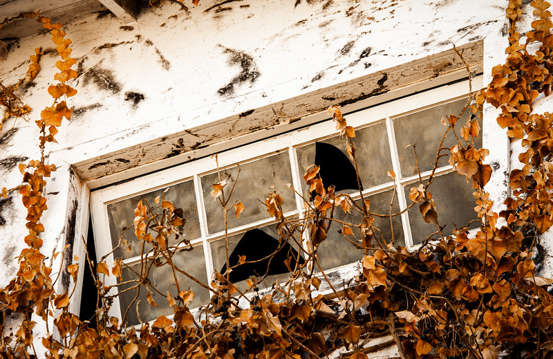 Window, Testarossa Winery, Los Gatos, California, 2009