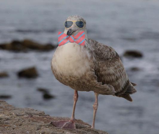Asilomar Birds