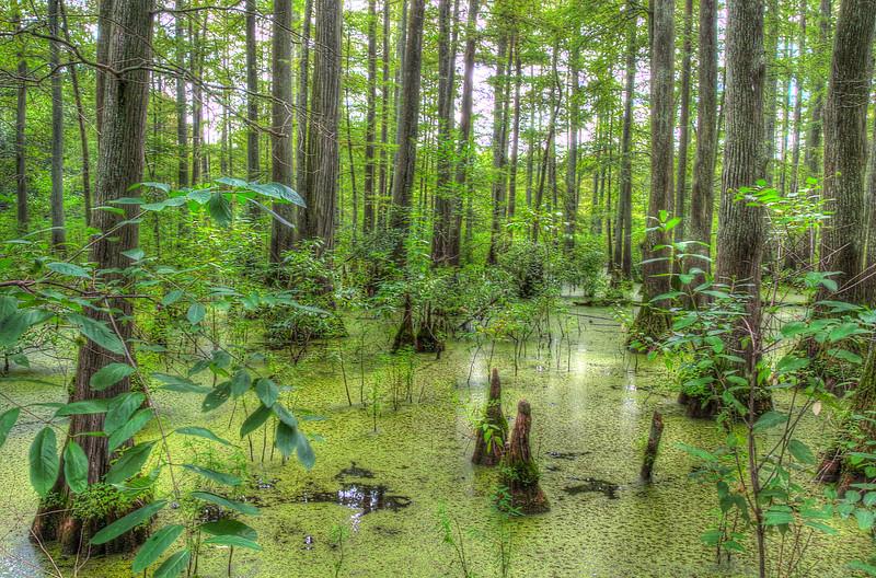 Southern Illinois Cypress SwampFAVDSC_8157_8_9_tonemapped.jpg