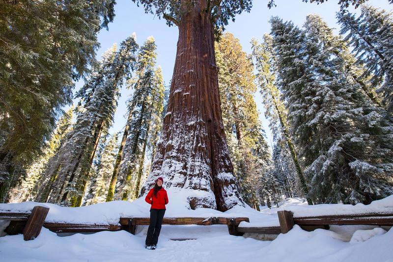 Giant Sequoia-6945.jpg