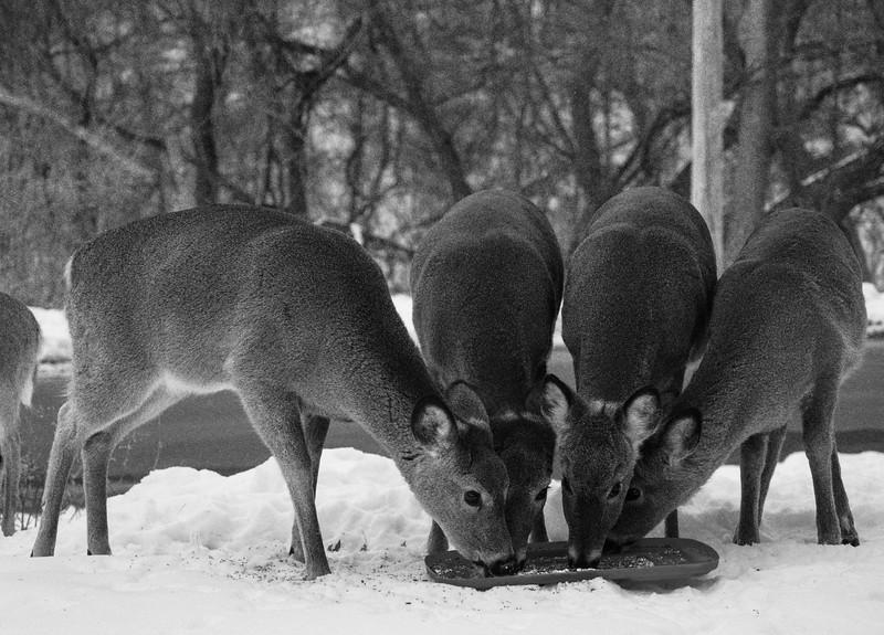 01-29-2021-deer-3.jpg