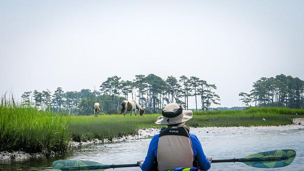 Eastern Shore Kayaking 2021