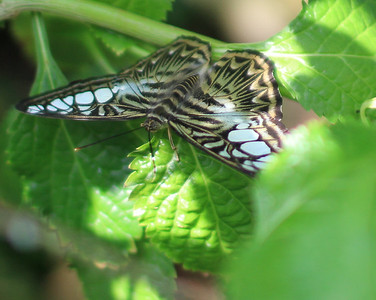 Butterfly House, MOBOT, Fitz's