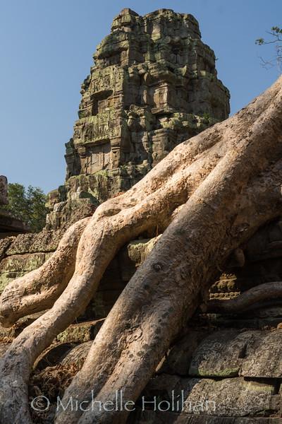 Ta Phrom Temple, Angkor Park, Siem Reap, Cambodia