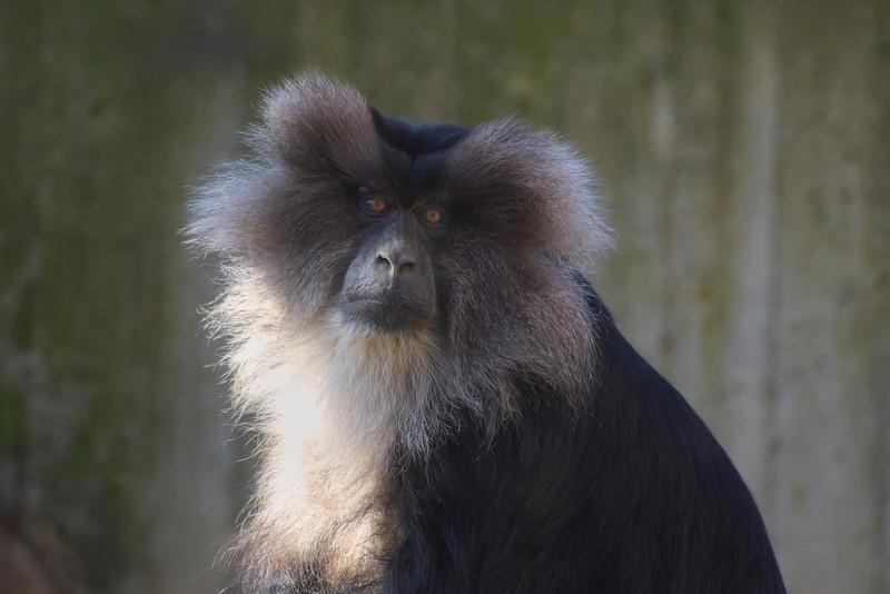 SFZ Monkey NEC_DSC7223.jpg