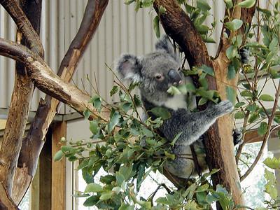 Return to Sydney 5, Wonderland and Australian Wildlife Park