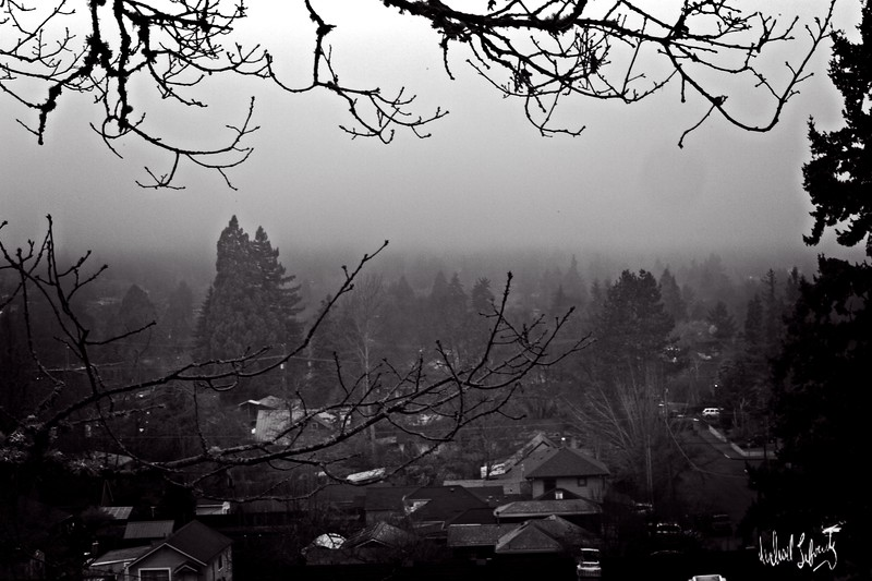 valley fog with branch  b&w.2020