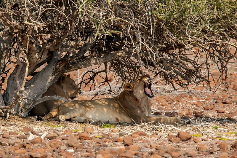 Namibia 69A6172.jpg
