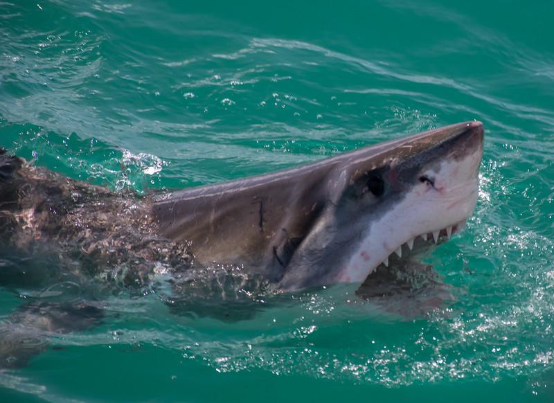 Cape Town_March_2015-438.jpg
